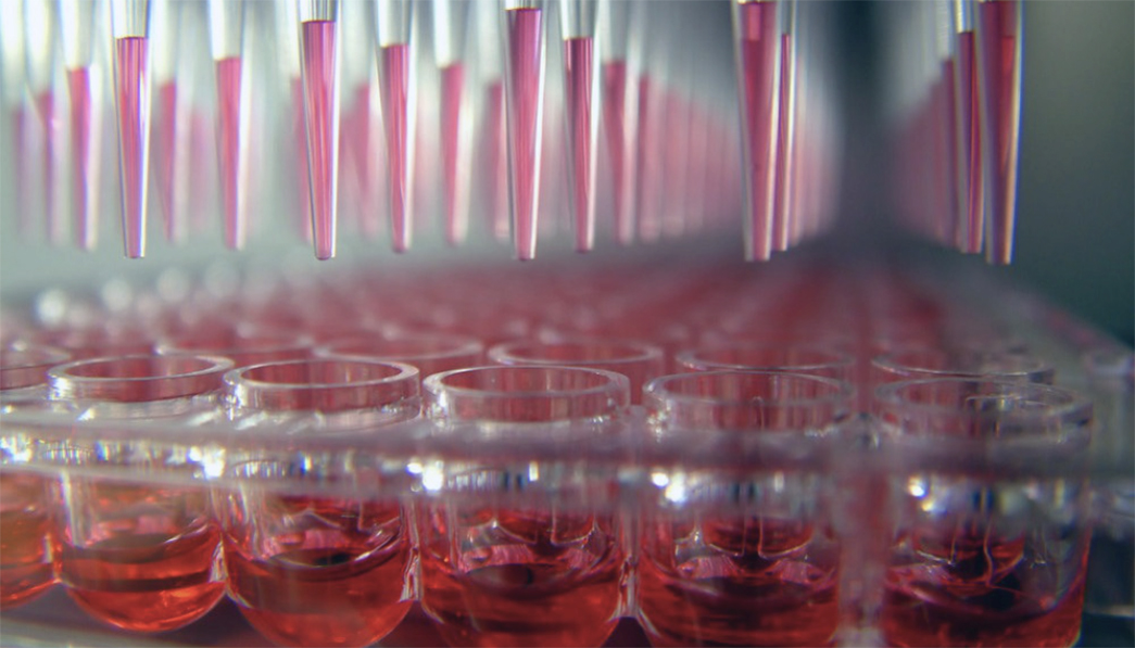 cell line development