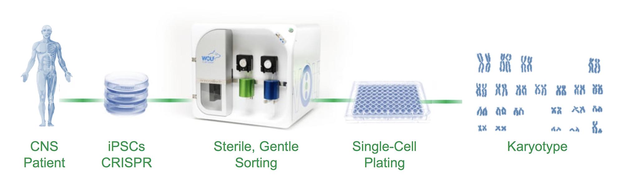 gene editing workflow