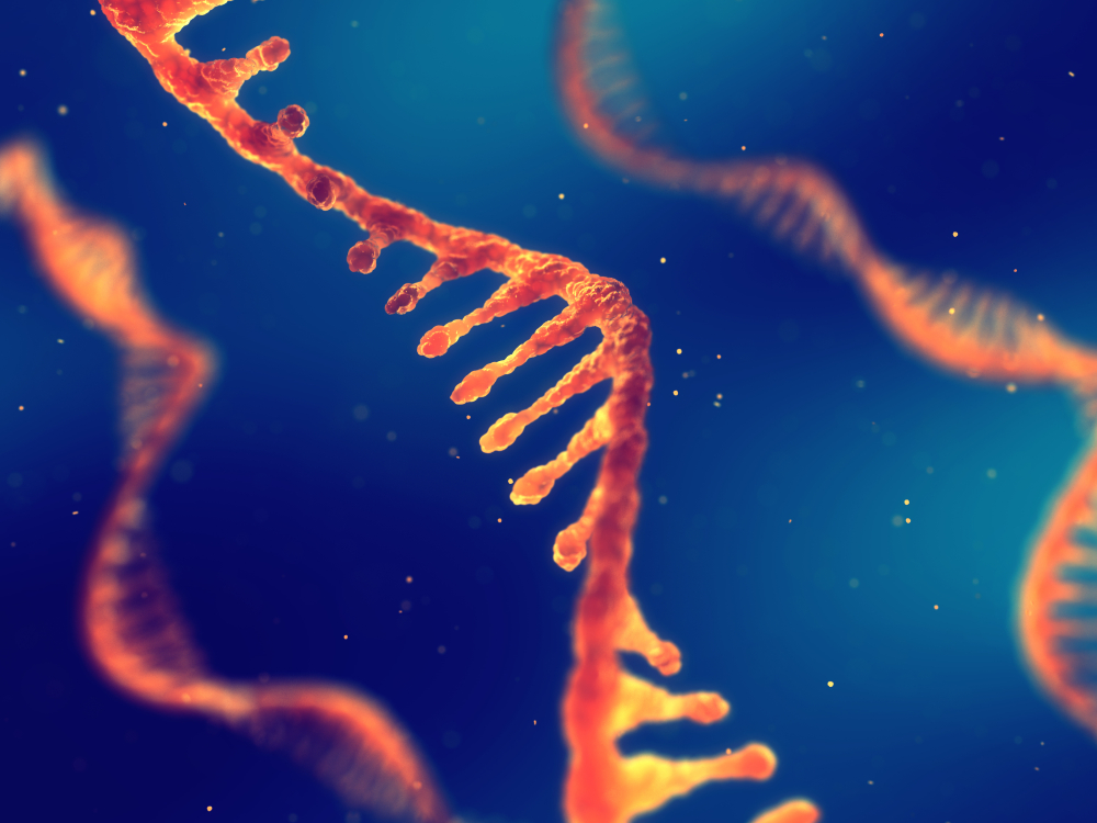 RNA Sequencing Analysis: Everything You Need to Know